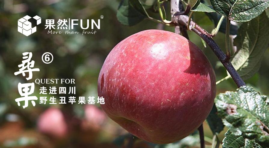 「图文直播」果然FUN寻果第6期---四川野生丑苹果